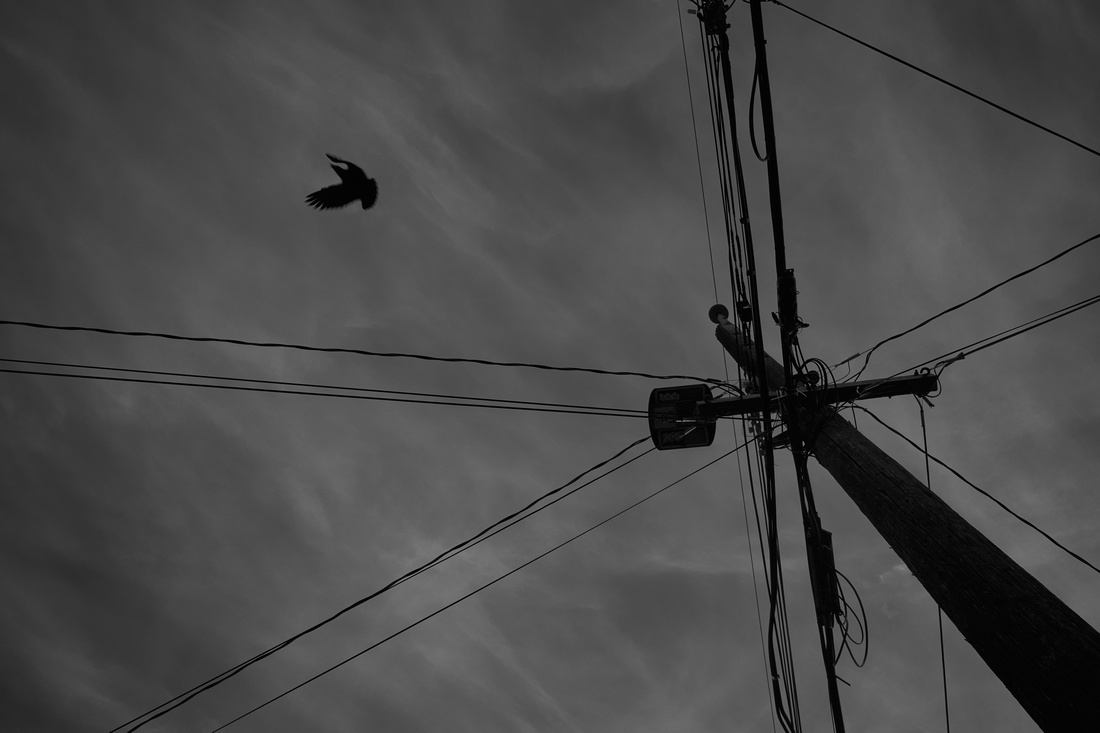 Black and White bird and telephone po.le